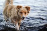 Puerto Montt, Puerto Varas, & Chiloe: Dogs